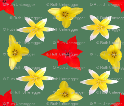 Tulips_1a