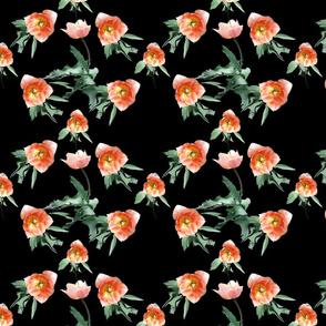 Tulips_on_black_1