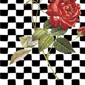rose_with_a_checkered_past