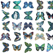 Blue Butterfly Collection