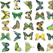 Yellow Green Butterflies