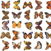 Orange Brown Butterflies