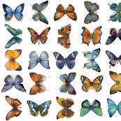 Orange Blue Butterflies