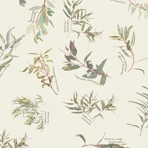 Eucalyptus foliage collection SMALLEST  Ivory