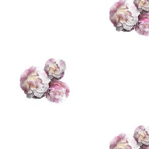 Californian Poppy 'Ballerina Pink' for Wallpaper half drop match