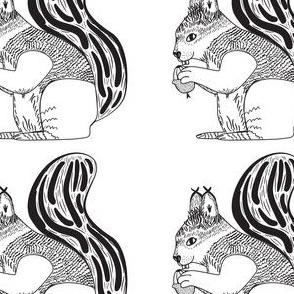 A Cheeky Squirrel