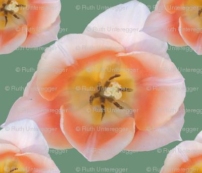 tulips_allover