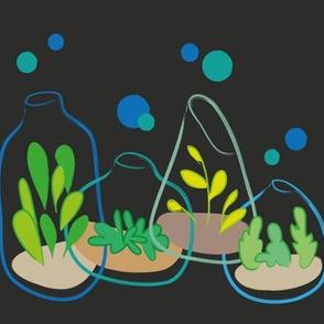 vivid terrariums