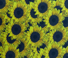Sunflowers_are_us_comment_478583_thumb