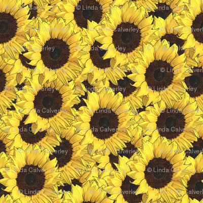 Sunflowers are us