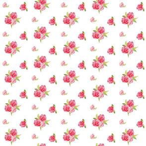 roses rosette