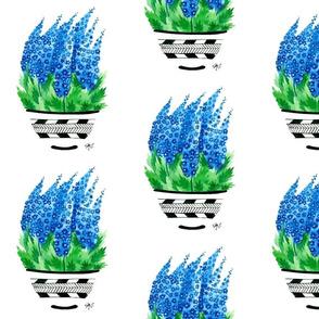 Bright Blue Delphinium