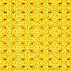 Loewenzahn_mit_einer_Biene_A
