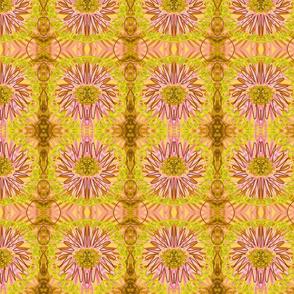 Dhoiri Pink