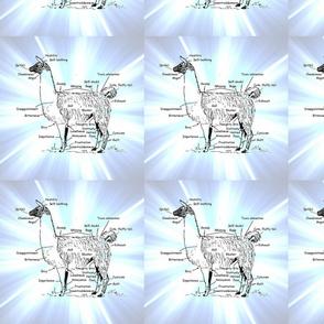 lovin my llama