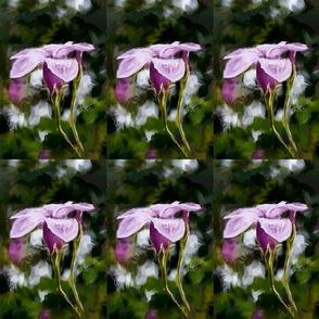 Rio Grande Flower 1_A