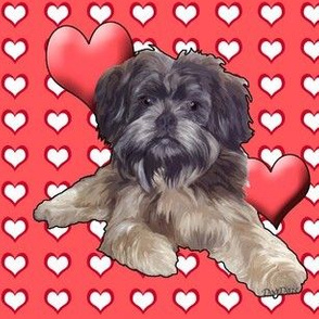 affenpinscher_with_hearts