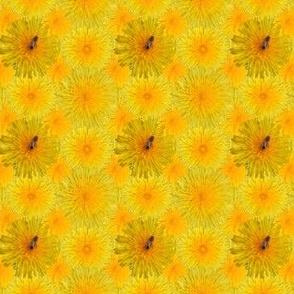 Dandelion_with_1_bee