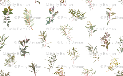 Eucalyptus foliage collection spaced on white  for fabrc