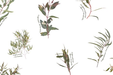 Rreucalyptus_foliage_collection_spaced_on_white___l__shop_preview