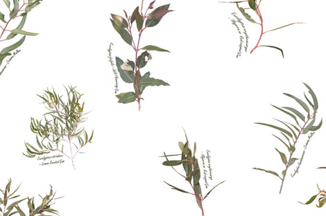 Eucalyptus foliage collection spaced on white  for fabrc fabric by emily_bieman on Spoonflower - custom fabric