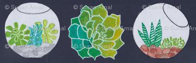 succulents & terraria