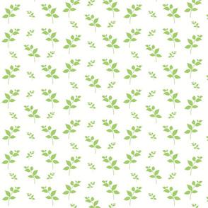 Leaves of Green- cream apple 525