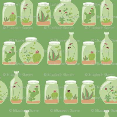 Gardens in bottles