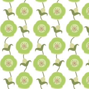 Poppy-Succulent