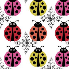 Ladybird parde