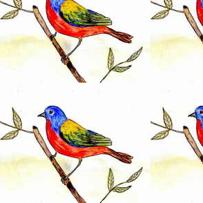 painted_bunting-ed