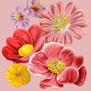 Pink Curtis Botanical Print