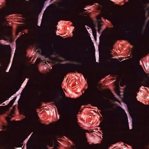Roses - 4