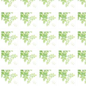 Sage Green Leaves