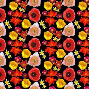 Top_Tulips_on_black