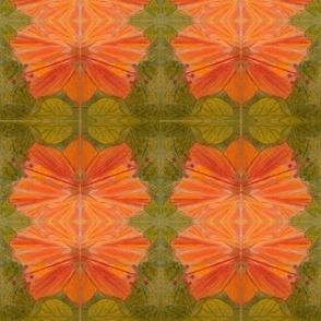 Mirror hibiscus