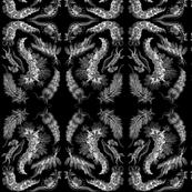 nudibranch_whiteonblack