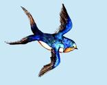 Rswallow_2_thumb
