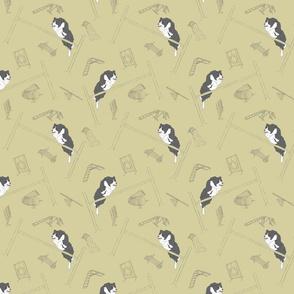 Agility Border Collies - khaki