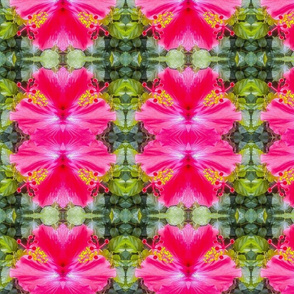 Photo Hibiscus