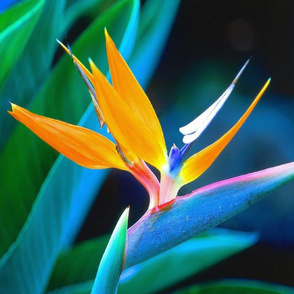 BIRD OF PARADISE PILLOWS