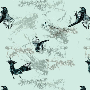 bird_blue_australian3