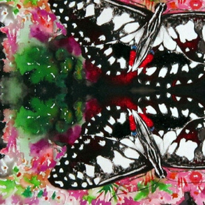 Checkered_Swallowtail 1 yard