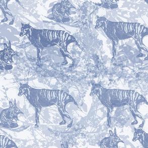 Tasmanian Tiger (Thylacine)BLUE