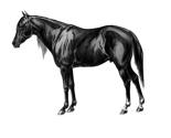 Blackandwhitevintagehorse.eps_thumb