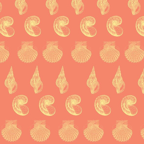 Cantaloupe shell