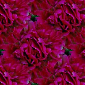 Seamless Scarlet Red Peonies