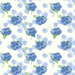Blue hydrangeas on white