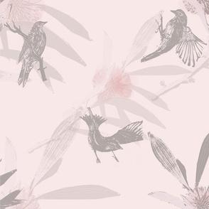 Hakea bird pink