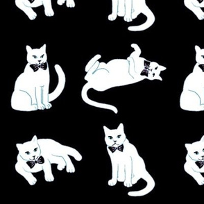 White cats on black, black and white cats
